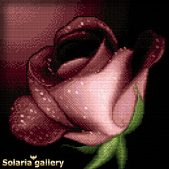 A Rose For You Solaria gallery