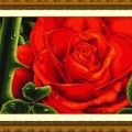 Dome 100804 Rose (Red)