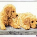 Dimensions 70-35309 Golden Retriever Puppies